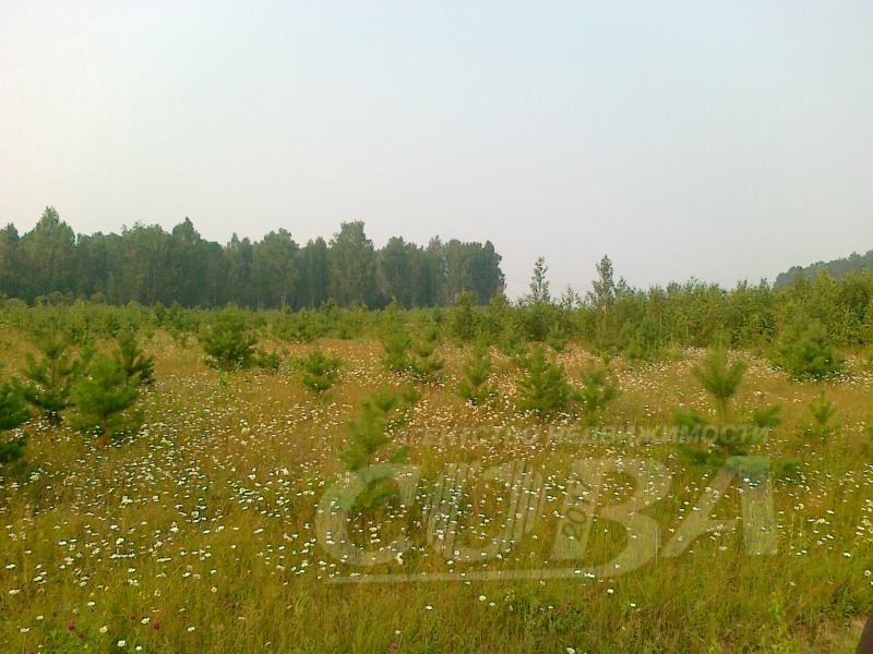 Участок сельско-хозяйственное, д. Бурмакина, по Ирбитскому тракту