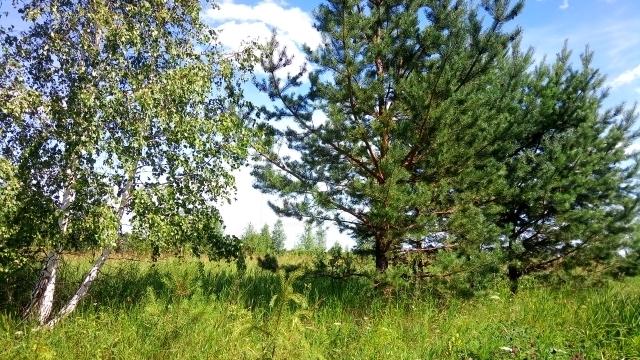Участок сельско-хозяйственное, д. Речкина, по Ирбитскому тракту