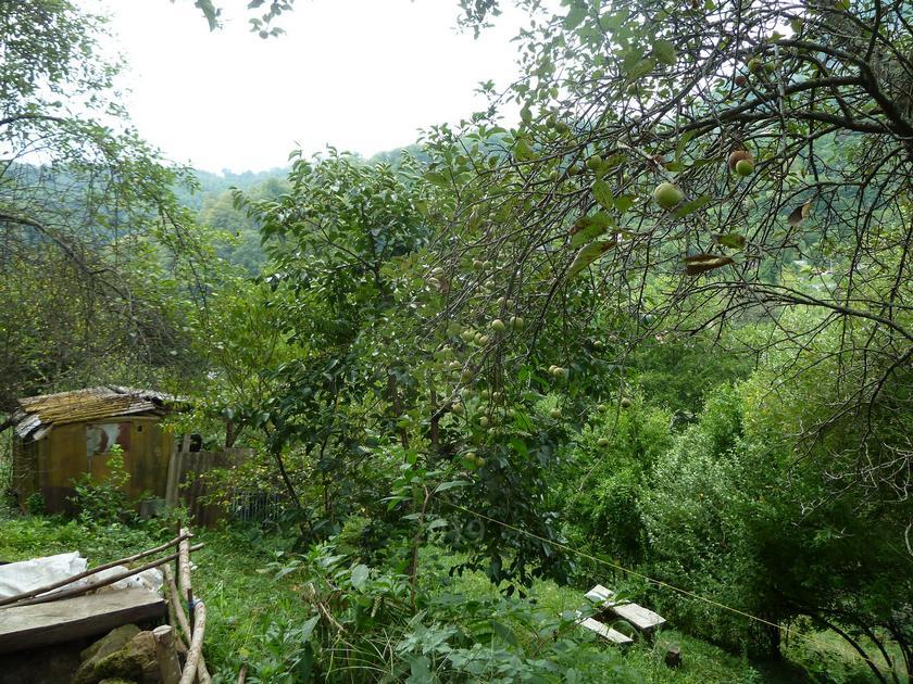 Садовый участок, в районе Пластунка , г. Сочи