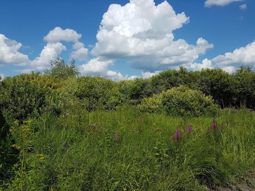 Садовый участок, Тобольского тракта, с. Ембаево, по Тобольскому тракту