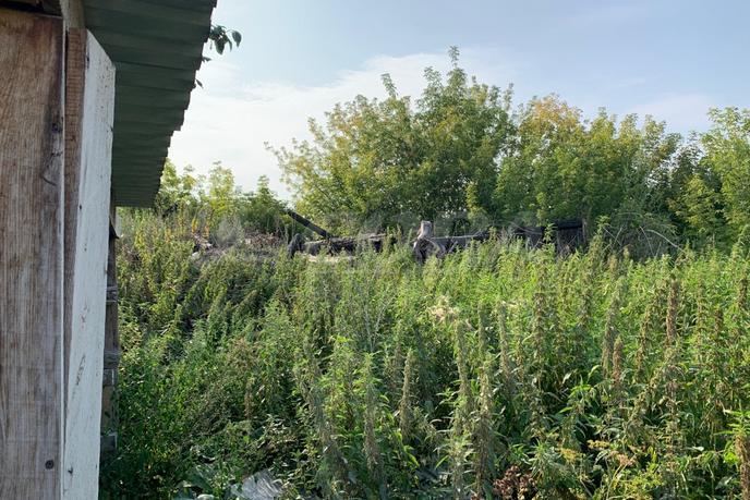 Садовый участок, в районе ТКАД (р-н карьера Чистый), с/о садовое товарищество Липовый Остров, по Салаирскому тракту